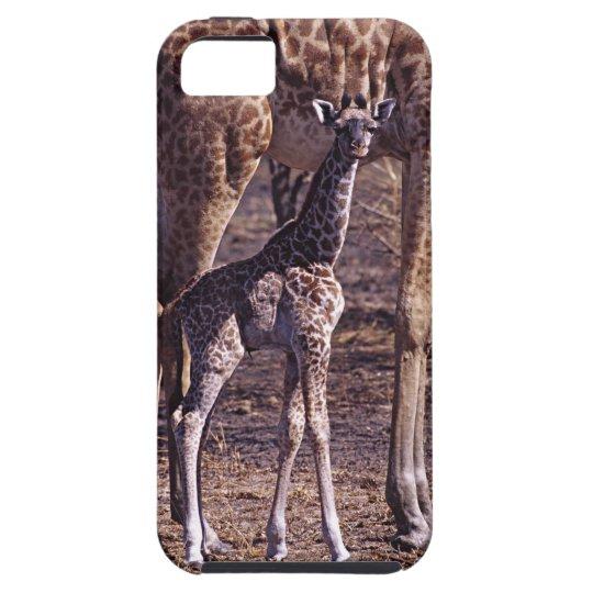 Baby giraffe and mother, Tanzania iPhone SE/5/5s Case