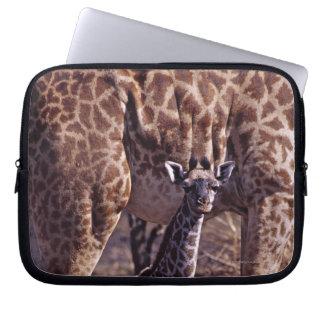 Baby giraffe and mother, Tanzania Laptop Computer Sleeves