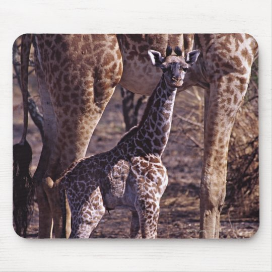 Baby giraffe and mother, Tanzania Mouse Pad