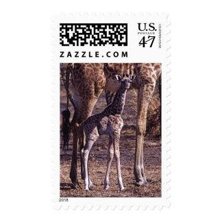Baby giraffe and mother, Tanzania Postage