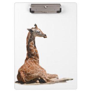Baby Giraffe Clipboard