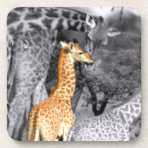 Baby Giraffe Drink Coaster