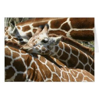 Baby Giraffe Greeting Cards