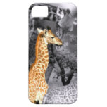 Baby Giraffe iPhone 5 Case