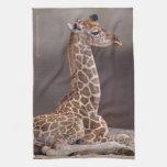 Baby Giraffe Kitchen Towel