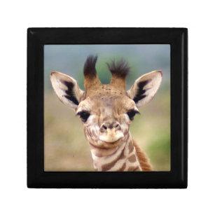 Baby Giraffe Picture Kenya Africa Small Jewelry Box