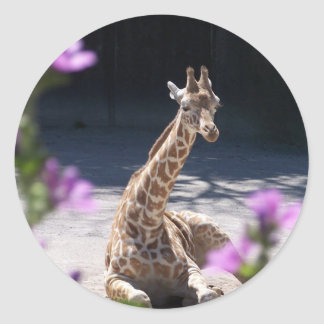 baby giraffe classic round sticker