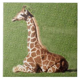 Baby Giraffe Tile