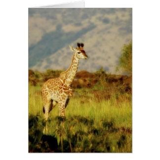 Baby giraffe wildlife cards