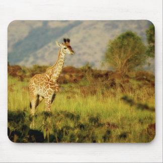 Baby giraffe wildlife mousepads
