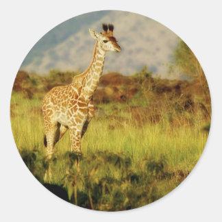 Baby giraffe wildlife stickers