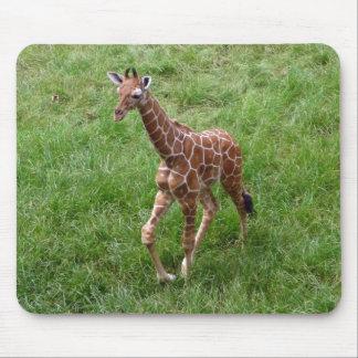 Baby Giraffe Zoo Photo Mousepad Wildlife