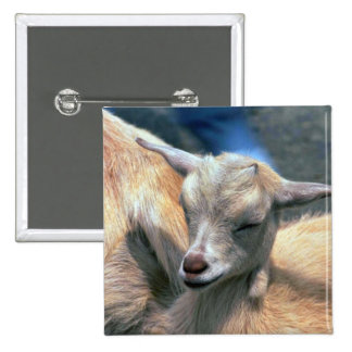 Baby Goat 2 Inch Square Button