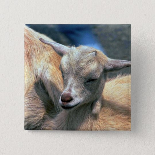 Baby Goat Button
