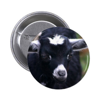 Baby Goat Buttons
