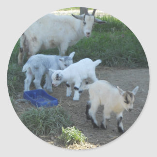 Baby Goat Family Classic Round Sticker
