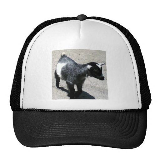 Baby Goat Hat