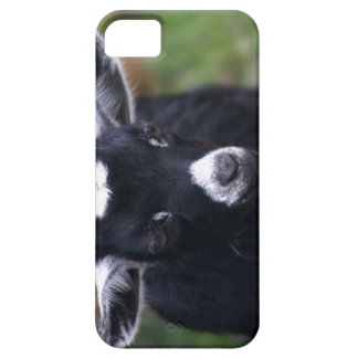Baby Goat iPhone SE/5/5s Case