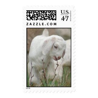 Baby Goat Postage