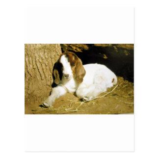 Baby Goat Postcard