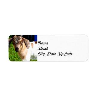 Baby Goat - Return Address Label