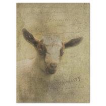 Baby Goat Socke Tissue Paper