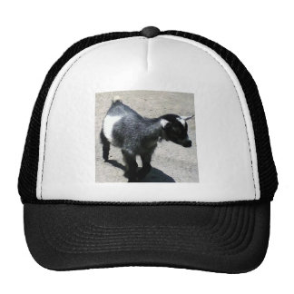 Baby Goat Trucker Hat