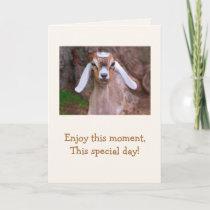 Baby Goat Wisdom Birthday Card