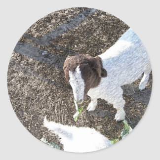 Baby Goat with Cabbage Leaves Classic Round Sticker