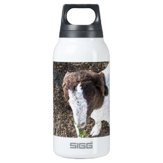 Baby Goat with Cabbage Leaves Insulated Water Bottle
