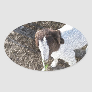 Baby Goat with Cabbage Leaves Oval Sticker