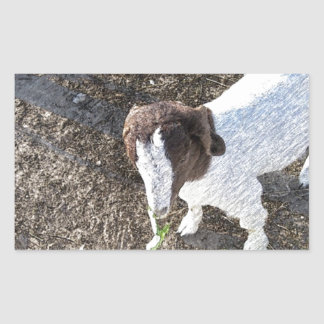 Baby Goat with Cabbage Leaves Rectangular Sticker