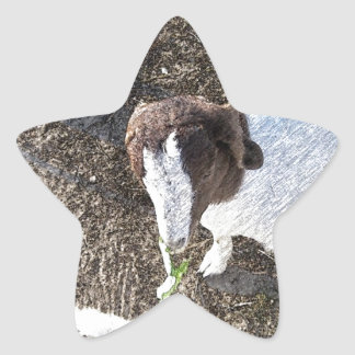 Baby Goat with Cabbage Leaves Star Sticker
