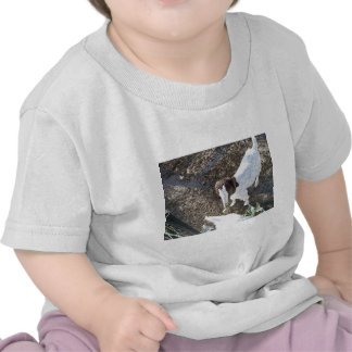Baby Goat with Cabbage Leaves Tee Shirts