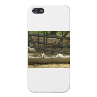 Baby Goats iPhone 5 Cover