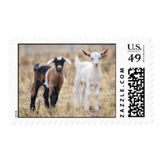 Baby Goats Postage
