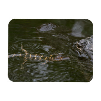 Baby Goes for a Swim Rectangular Photo Magnet