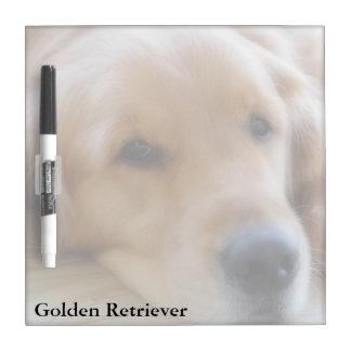 Baby,Golden Retriever Square Dry Erase Board