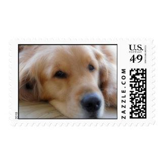 Baby, Golden Retriever Stamp
