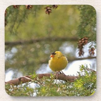 Baby Goldfinch Photo Drink Coaster