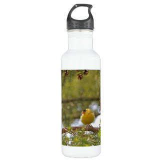 Baby Goldfinch Photo Stainless Steel Water Bottle
