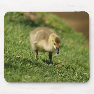 Baby Goose Looking at a Baby Mushroom Mousepad