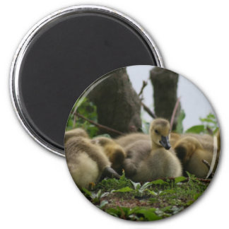 Baby Goose Fridge Magnet