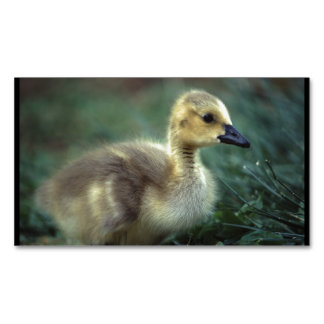 baby goose magnetic business card
