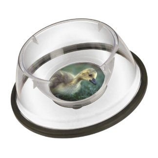 baby goose pet bowl