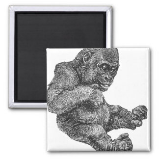 Baby Gorilla 2 Inch Square Magnet