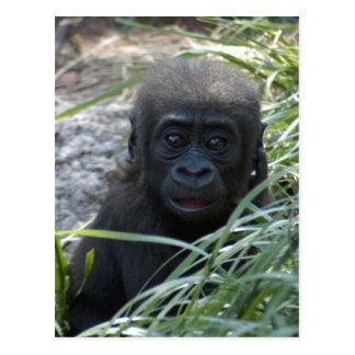 Baby Gorilla 4x6 Postcard