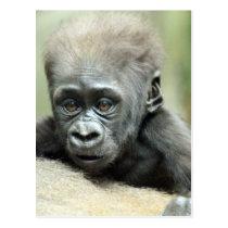 BABY GORILLA RELAXING POSTCARD