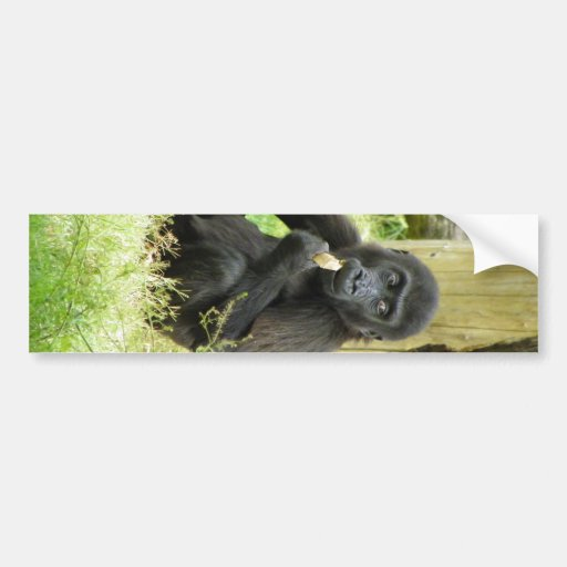 Baby Gorilla Snacking Bumper Sticker