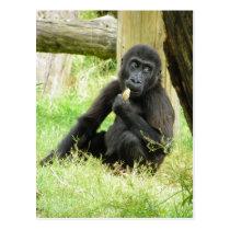 Baby Gorilla Snacking Postcard